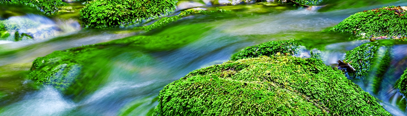 Water stream in a forest, shot made using tripod and long exposure.